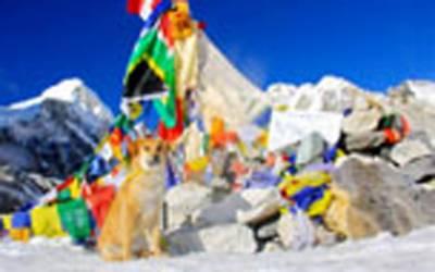 مائونٹ ایورسٹ کی چوٹی پر جانیوالا دنیا کا پہلا کتا