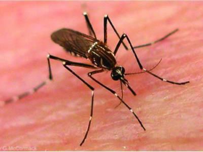 پنجاب میں مزید 14 مریضوں میں ڈینگی وائرس کی تصدیق، تعداد 2547 ہو گئی