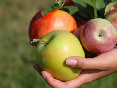سیب کے جو س کا روزانہ استعما ل یاددا شت کو بہتر بنا تا ہے