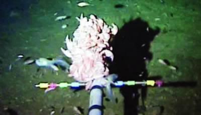 بحرالکاہل میں سب سے زیادہ گہرائی میں رہنے والی مچھلی دریافت