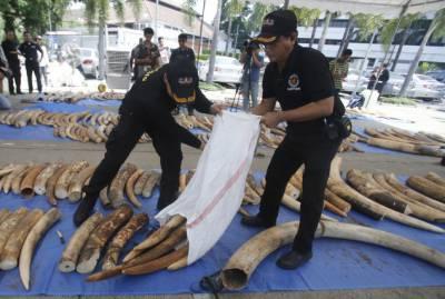 تھائی لینڈ میں 60لاکھ ڈالر کے تین ٹن ہاتھی دانت پکڑے گئے