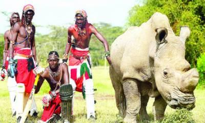 جنوبی افریقہ: مسائی قبیلہ نے تلوار اور بھالے چھوڑ کر بلے اٹھا لیے