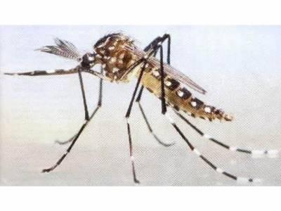 لاہور،کراچی اور اسلام آباد سمیت کئی شہروں میں ڈینگی وائرس کا پھر خطرہ