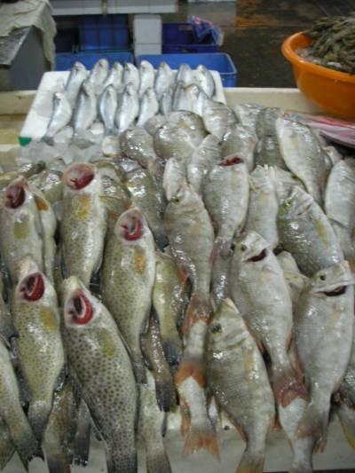 مچھلی کی مصنوعات کی برآمدات میں 6.48فیصد کمی