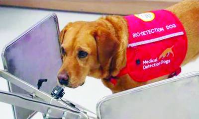 لندن: ڈاکٹروں نے کینسر کو سونگھنے والے کتے کی خدمات حاصل کرلی