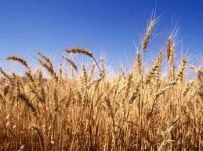 پاکستان کے زرعی شعبہ میں آسٹریلیا کا ایک کروڑ تیس لاکھ ڈالر کی سرمایہ کاری کا علان