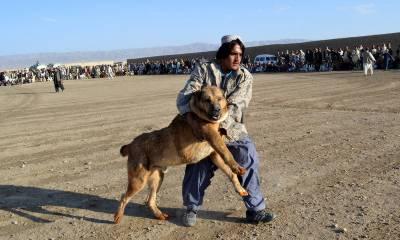 دورحاضر کے کتوں کی نسل وسطی ایشیا سے شروع ہوئی: سروے