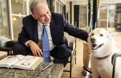 اسرائیلی وزیراعظم کے کتے نے تقریب میں 2 مہمانوں کو کاٹ لیا