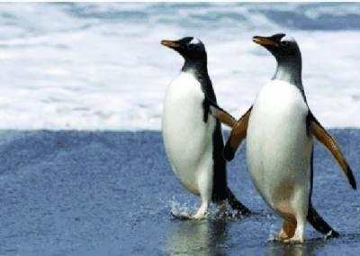 چین: ننھی پینگوئنز کا برف پر ڈانس