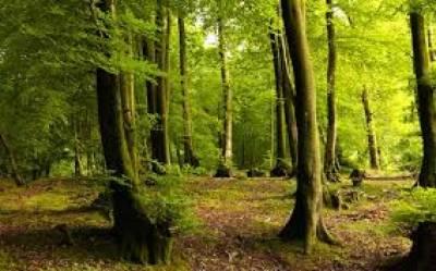 جنگلات کے 16 افسروں کو جیوگرافیکل انفارمیشن سسٹم کی ٹریننگ