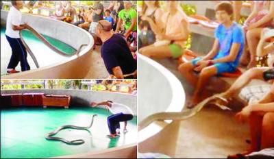 تھائی لینڈ: شو کے دوران کوبرا سانپ نے تماشائیوں پر حملہ کردیا