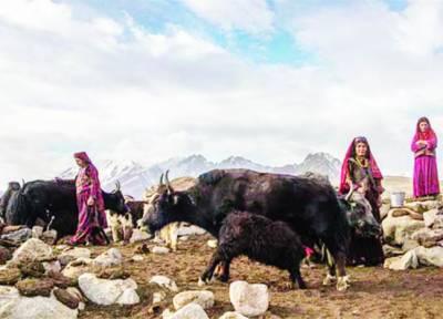 افغانستان کا ایسا قبیلہ جسے امریکہ کا پتہ ہے نہ طالبان کا
