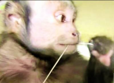 دانتوں کی صفائی کا خاص خیال رکھنے والا بندر