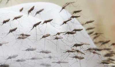 زیکا پر قابو پانے کیلئے برازیل اور کمبوڈیا میں کروڑوں مچھر چھوڑے جائیں گے