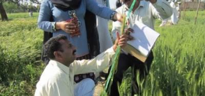 فوڈ سیفٹی پروگرام گوجرانوالہ' فیصل آباد' راولپنڈی اور ملتان تک بڑھا دیا گیا