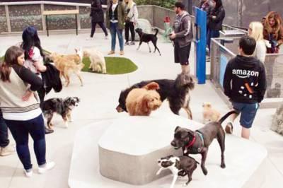 ایمازون کمپنی میں 4ہزار کتے بھی ملازم