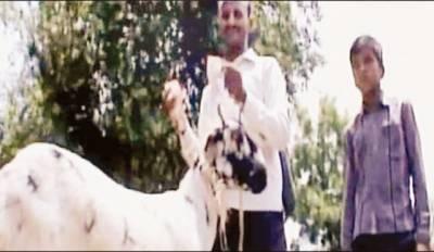 بھارت: بھوکی بکری مالک کے ہزاروں روپے کھا گئی