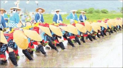 جاپان میں چاولوں کی کاشت کا روایتی تہوار