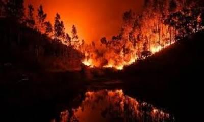 پرتگال : جنگل میں تاریخ کی ہولناک آتشزدگی' سینکڑوں گھر خاکستر' 62 افراد ہلاک