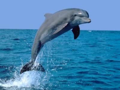 ;پاک سرزمین پارٹی کو ڈولفن کا انتخابی نشان الاٹ