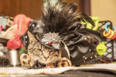 نیو یارک میں بلیوں کے فیشن شو کا انعقاد