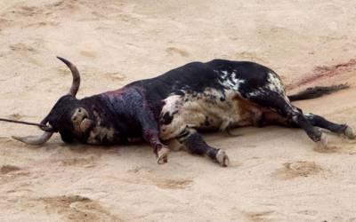 قربانی کیلئے لایا بیل بارش کے دوران کرنٹ لگنے سے ہلاک