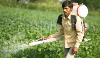 فصلوں پر سپرے درست آلات اور طریقوں سے کیا جائے: محکمہ زراعت