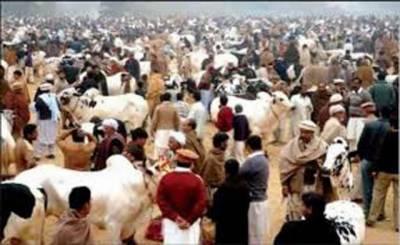 کراچی' قربانی کیلئے زیادہ جوش و خروش' لوگوں نے بڑھ چڑھ کر حصہ لیا