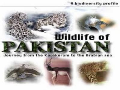محکمہ وائلڈ لائف نے قیمتی پرندے پاکستان سمگل کرانیکی کوشش ناکام بنا دی