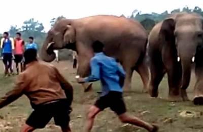 بھارت: جنگلی ہاتھیوں کے ساتھ سیلفی کے شوق نے کئی لوگوں کی جان لے لی
