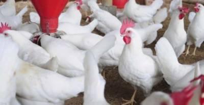 برائلر مرغی کا گوشت 2روپے اضافہ سے 254روپے کلو ہوگیا