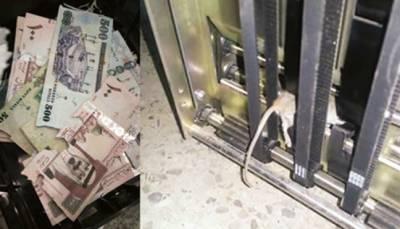 سعودی عرب میں دل جلے چوہے نے رقم کتر ڈالی