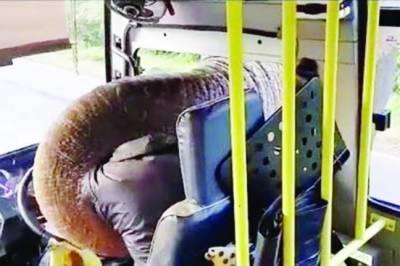 کولمبو:بھوک سے بے حال ہاتھی کا بس پر دھاوا