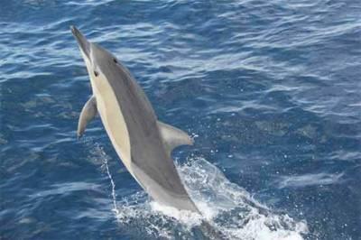 دوسری مچھلیوں کو ٹریننگ دینے والی کرتب باز ڈولفن
