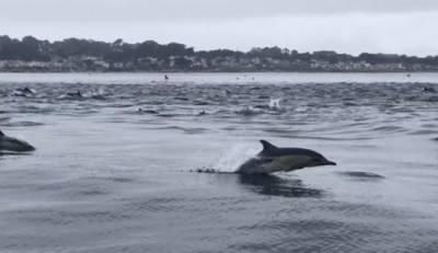 کیلیفورنیا میں لاتعداد ڈولفنز کی ریس