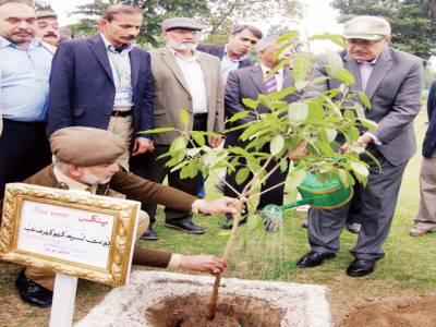 پنجاب میں ایک کروڑ 20 لاکھ پودے لگائے جائیں گے: چیف سیکرٹری