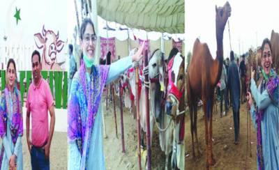سپر اسٹار حنا الطاف کیٹل فیسٹیول پہنچ گئیں' آزادی کے رنگ دیکھ کر دنگ