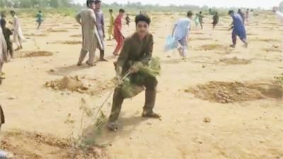 خیبر پی کے: شہریوں نے شجرکاری مہم کے فوری بعد پودے اکھاڑ پھینکے