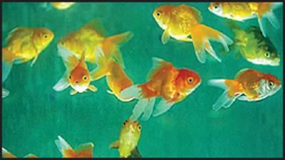 کیا مچھلی کو پیاس لگتی ہے؟آخرکار سوال کاجواب مل ہی گیا