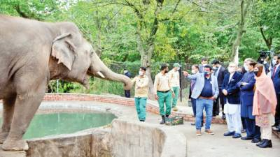 کاون کمبوڈیا میں اپنے ساتھی ہاتھیوں سے مل کر خوشی محسوس کرے گا،عارف علوی