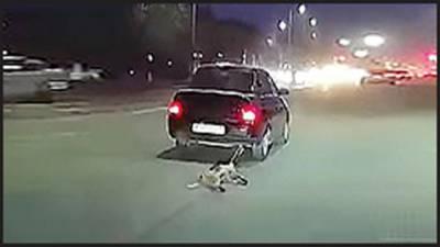 قازقستان میں کتے کو گاڑی کے پیچھے باندھ کر گھسیٹنا شہری کو مہنگا پڑ گیا
