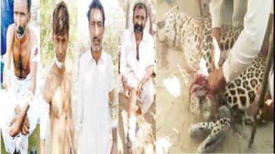 مٹھی، سرحد پار سے آنے والے چیتے کا حملہ، 8 دیہاتی زخمی
