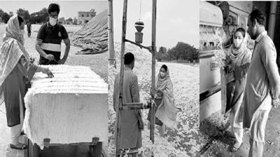 معیارکوبہتربنانے کیلئے فیکٹری مالکان کپاس کی صفائی پرتوجہ دیں: رابعہ کنول